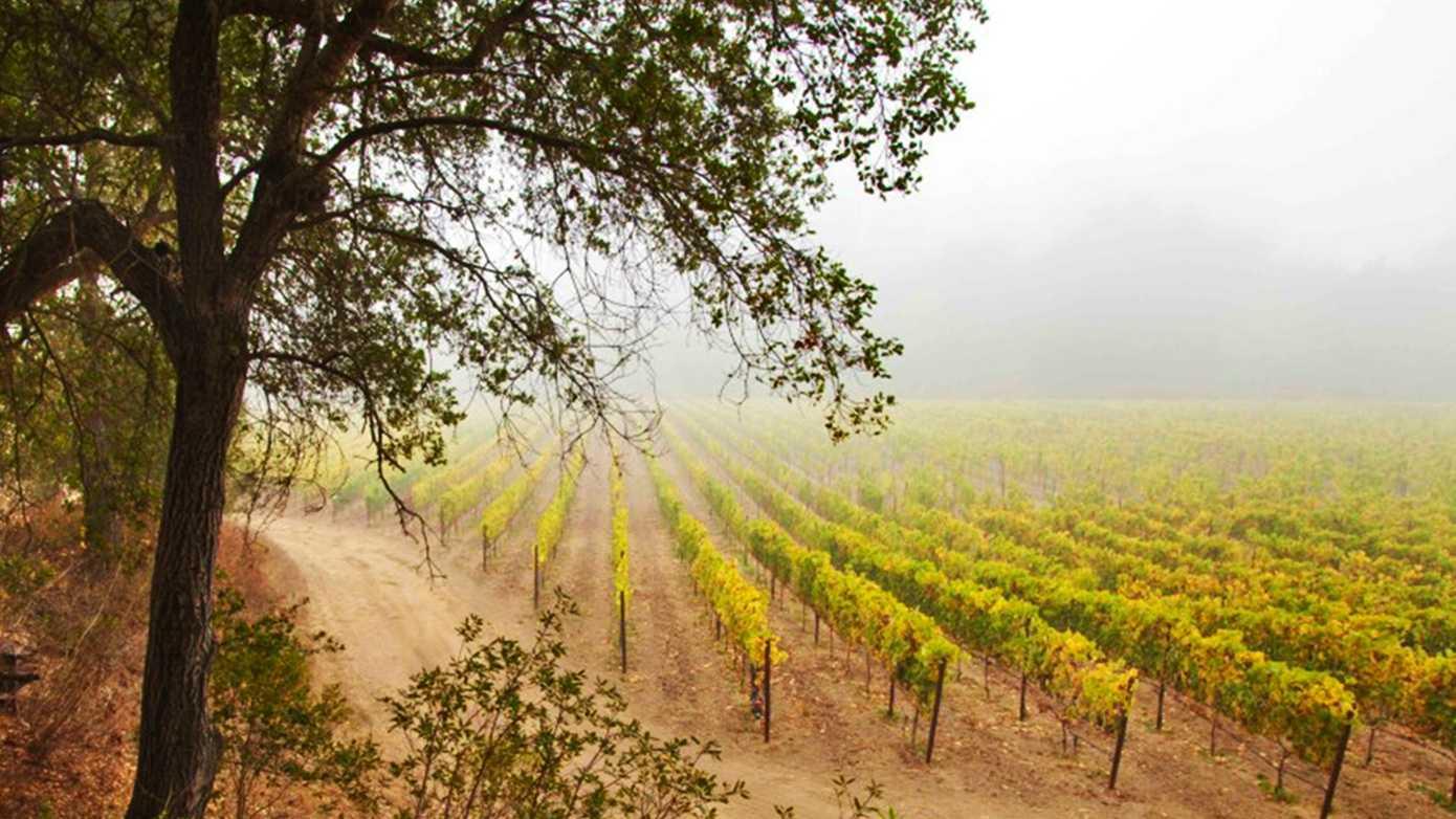 storrs Storrs Winery.jpg