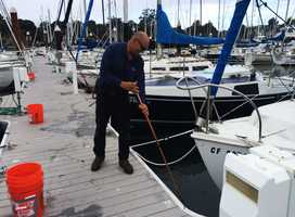 On Friday, 35 volunteers showed at to help people who work in the harbor, and together they hauled 20 tons of dead anchovies out.