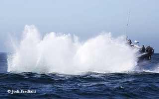 Jodi Frediani / Monterey Bay Whale Watch (Oct. 13, 2014)
