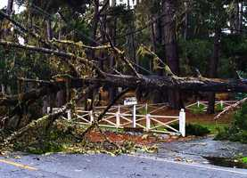 A tree ripped down power lines in this Pacific Grove neighborhood.Dec. 11.