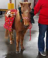 A pony delivered presents in Watsonville.
