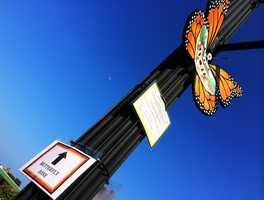 The Pacific Grove Downtown Business Improvement District debuted a downtown art installation project this week called Monarch Memories.