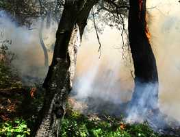Monterey fire - April 15 :Two acres of heavy brush were scorched in the hills above Monterey near Barnet Segal Lane and Del Monte Shopping Center.