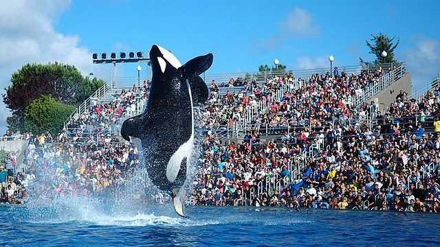 top amusement parks - SeaWorld California