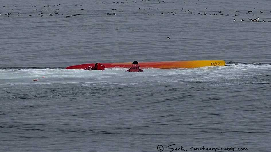 Two people swim back to their overturned kayak after a whale nearly landed on them near Moss Landing. (Sept. 12, 2015)