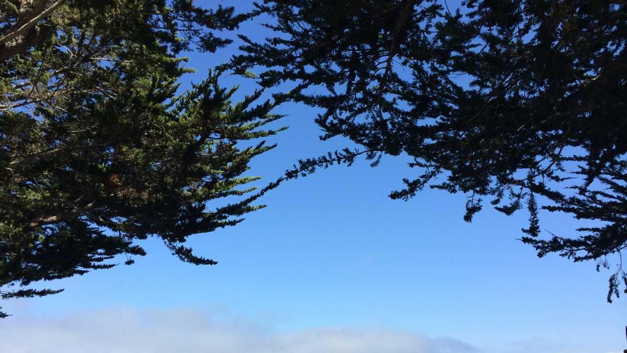 Monterey Harbor.jpg