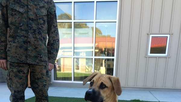 DLI Doggy 1.jpg
