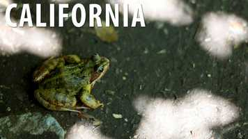 California:The logical thing to do with a frog that dies during a frog-jumping contest would be to eat it, but not in California! It is against the law to consume a frog that has died in a frog-jumping contest in this state. (Source: Business Insider)