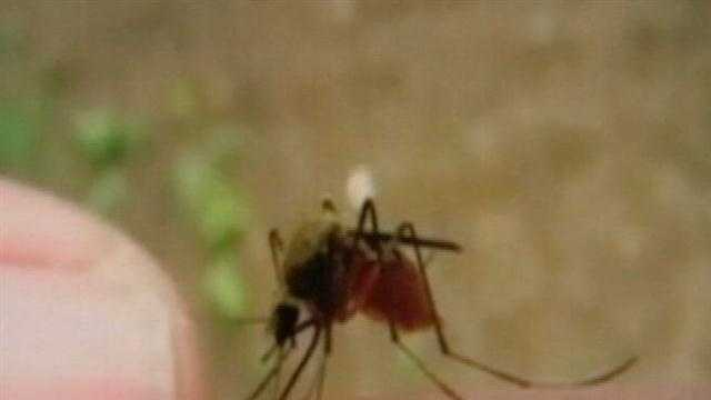 img-Number of West Nile virus cases going up in Mississippi