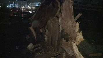 Some of the trees torn down by the tornado were up to 200 years old, USM officials said.