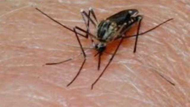 Local West Nile Cases