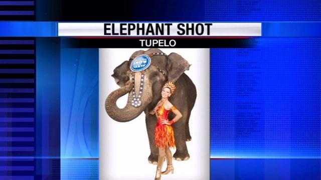 Elephant shot 2