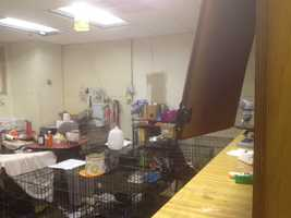 The shelter's vet-tech room was torn up by the burglars as they looked for drugs, ARF officials said.