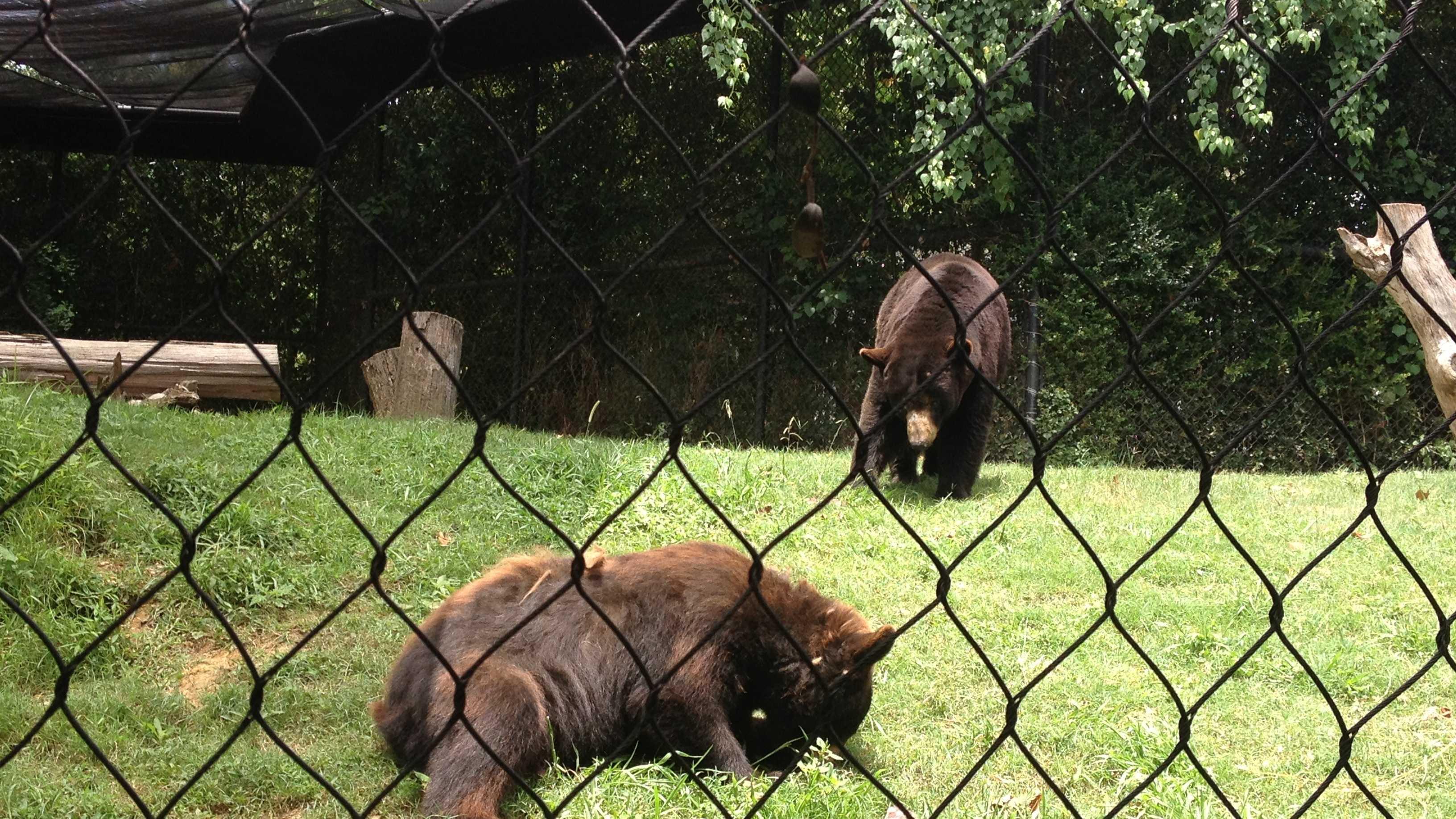 bears eat frozen treats.JPG