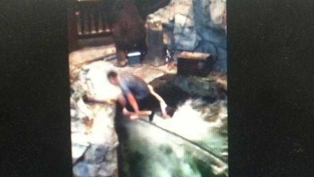 kids jump into fish tank
