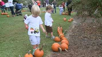 The annual Pumpkin Adventure is under way at the Mississippi Ag Museum.