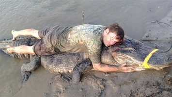 Record-breaking alligators caught in Mississippi. Click here for the story, pictures and video.