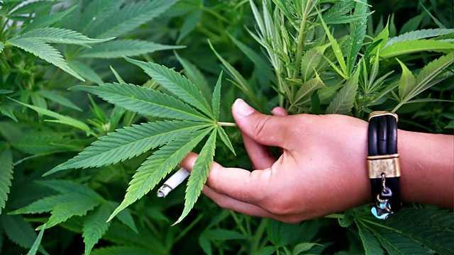 marijuana pot generic