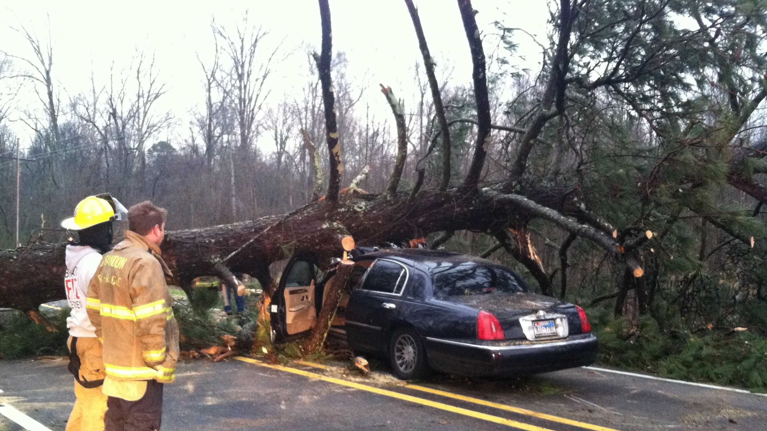 Tree falls in Brandon