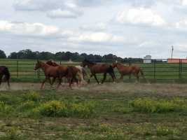 The horses are available for adoption through the Bureau of Land Management for a $125 fee.
