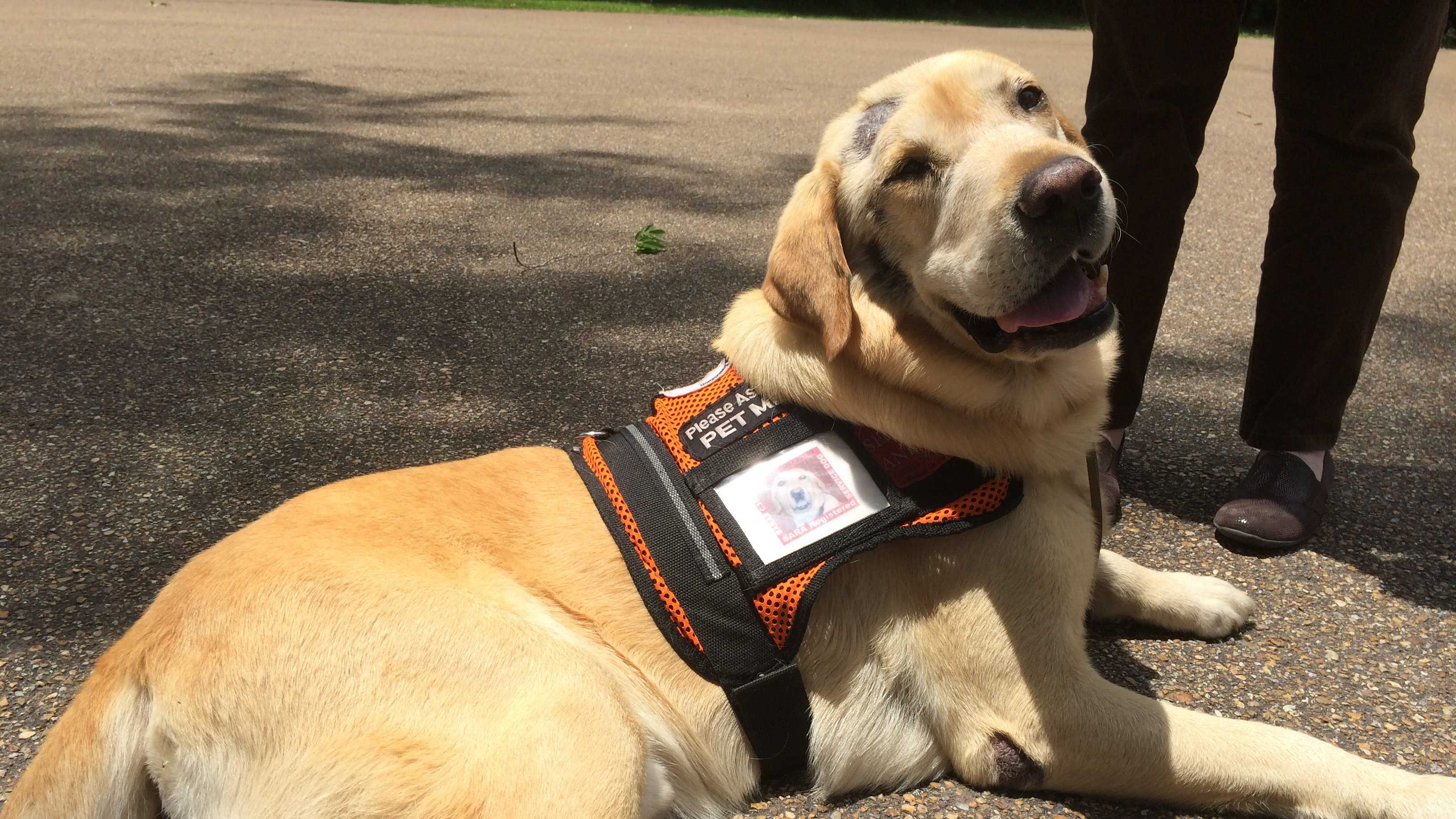 Booster the service dog