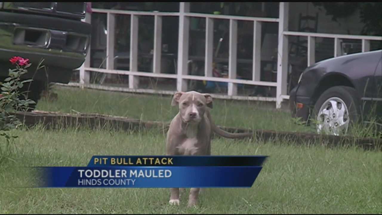 A toddler is attacked by a Pit Bull at his grandfather's home.