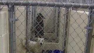 ARC shelter dogs animal dog cage - 19906207