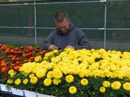 About 30,000 flowers will fill Old Hilltop on May 19, covering 34 acres in the infield and decorating more than 70 tents. Rob Roblin asks Pimlico Race Course facilities director Ben Harrison what it takes to get the job done. | WBAL-TV