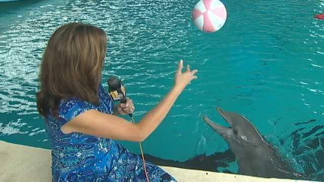 National Aquarium in Baltimore Dolphins