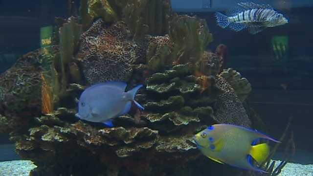 Baltimore Aquarium Food Menu