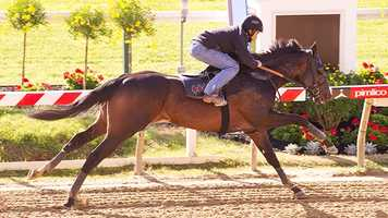 Tiger Walk tests the track in a workout. | Jim McCue\Maryland Jockey Club