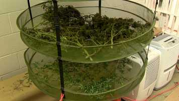 """""""This was what we consider a sophisticated grow operation that has been going on for some time,"""" Llewellyn said."""