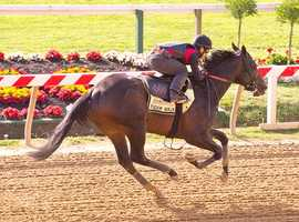 Tiger Walk takes to the track Sunday morning. | Jim McCue\Maryland Jockey Club