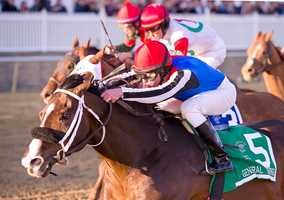 Yawanna Twist runs in the Pimlico Special | Jim McCue\Maryland Jockey Club