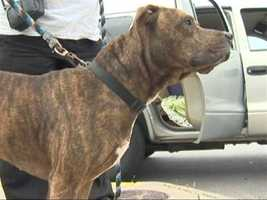 While some pets were killed in the fire, the Wagner family credited their pit bull with saving the rest of their lives.