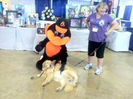 Pets On Wheels' seventh annual Pet-a-Paw-Looza and Dog-A-Thon kicks off at the Maryland State Fairgrounds in Timonium.