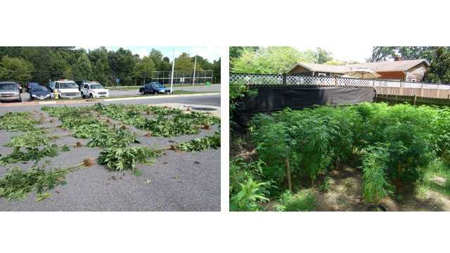 Weed Plants Seized From Gambills Home