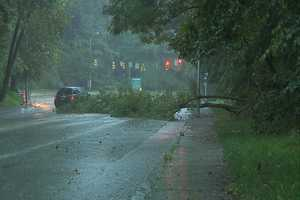 A tree fell into the busy roadway at Cold Spring Lane and Greenspring Avenue in Baltimore.
