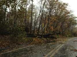 Downed tree in Cecil County.