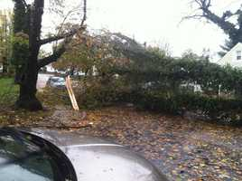 Tree down onHerring Run Drive in northeast Baltimore.