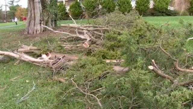 Historic tree keeps Harford County community in the dark