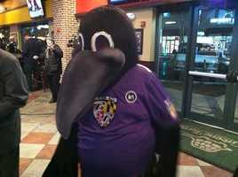 The Ravens' mascot, Poe, at the Greene Turtle on McHenry Row in Baltimore. Poe will travel all across Baltimore on the Ravens Purple Caravan.