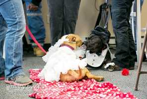 As couples went out for nice dinners on Thursday, the Baltimore Humane Society held a Valentine's Day celebration of its own to bring attention to about 200 animals at the no-kill shelter that are in need of loving homes.