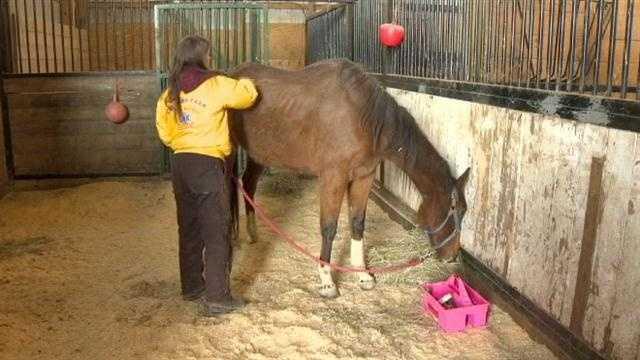 horses14.jpg