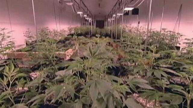 Gov may back a medical marijuana bill
