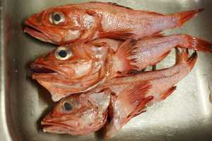 The rockfish, or striped bass, is the state fish.