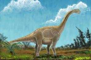 The Astrodon johnstoni is the state dinosaur.
