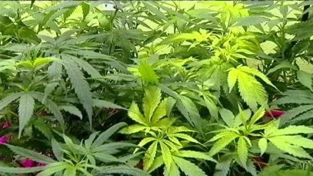 Medical marijuana bill picks up more support