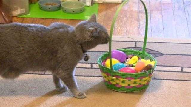 EASTER PET SAFETY