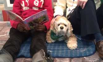 Kaiser-Mohondro said The Children's Guild is hoping more volunteers with therapy dogs can get involved to help expand the school's animal interaction program. Anyone interested in volunteering can email her at mohondrob@childrensguild.org.Read the story.